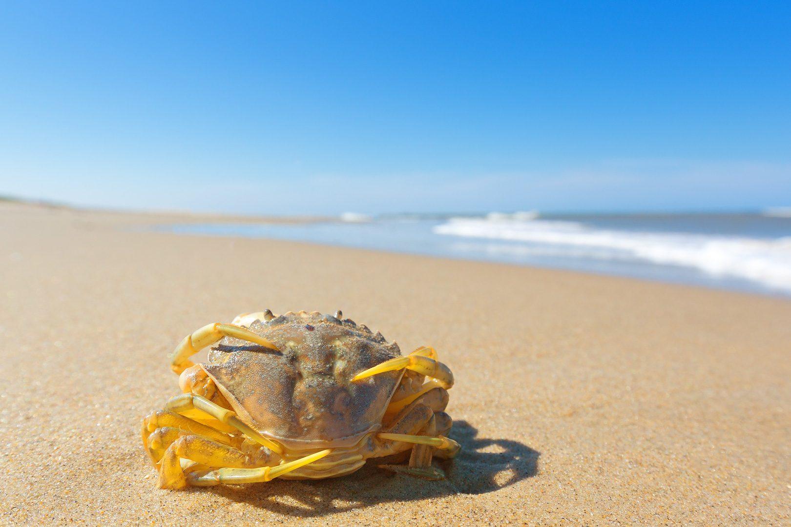 foto-krab-strand-natuur