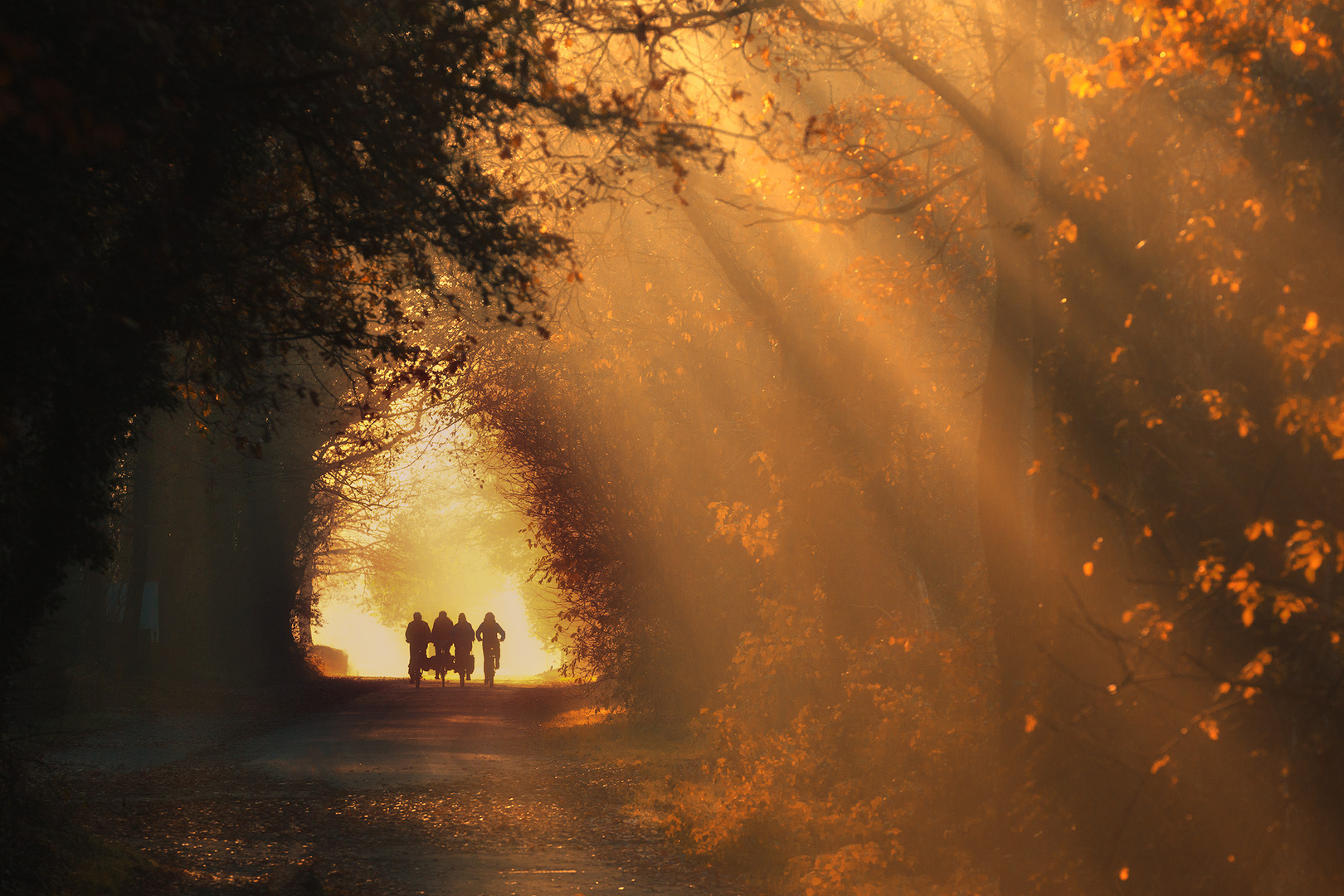 Fietsers onderweg op een herfst ochtend
