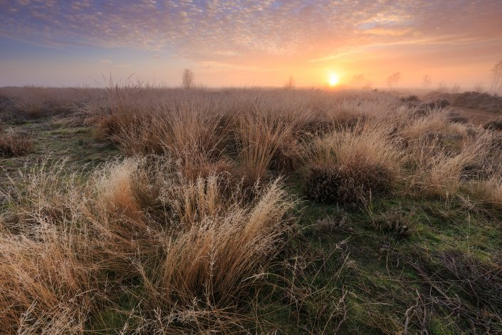 A colorful frosty autumn sunrise over the heathland