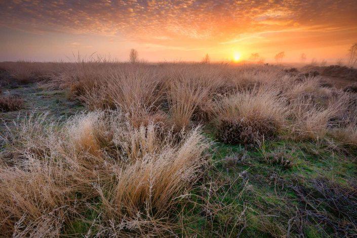 Balloërveld - Een mooie herfst ochtend op het heideveld Balloërveld in Drenthe tijdens de zonsopkomst