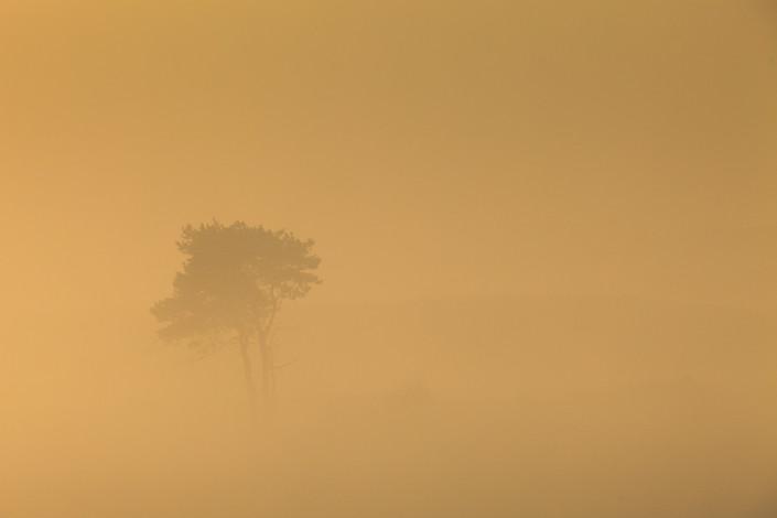 Herfst op de Posbank in een mistig landschap met warm licht