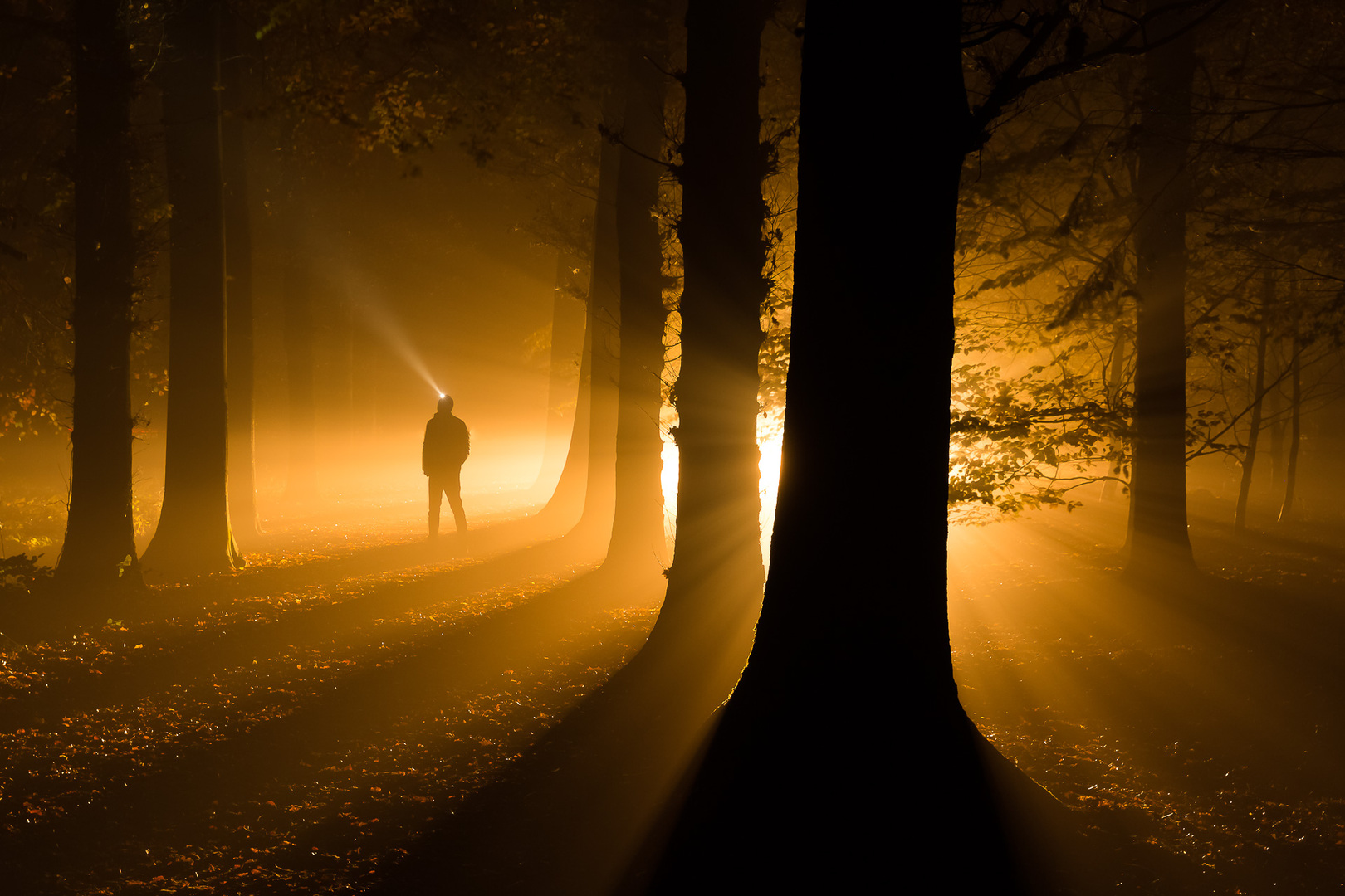 Into Darkness - Woods near Roden, The Netherlands