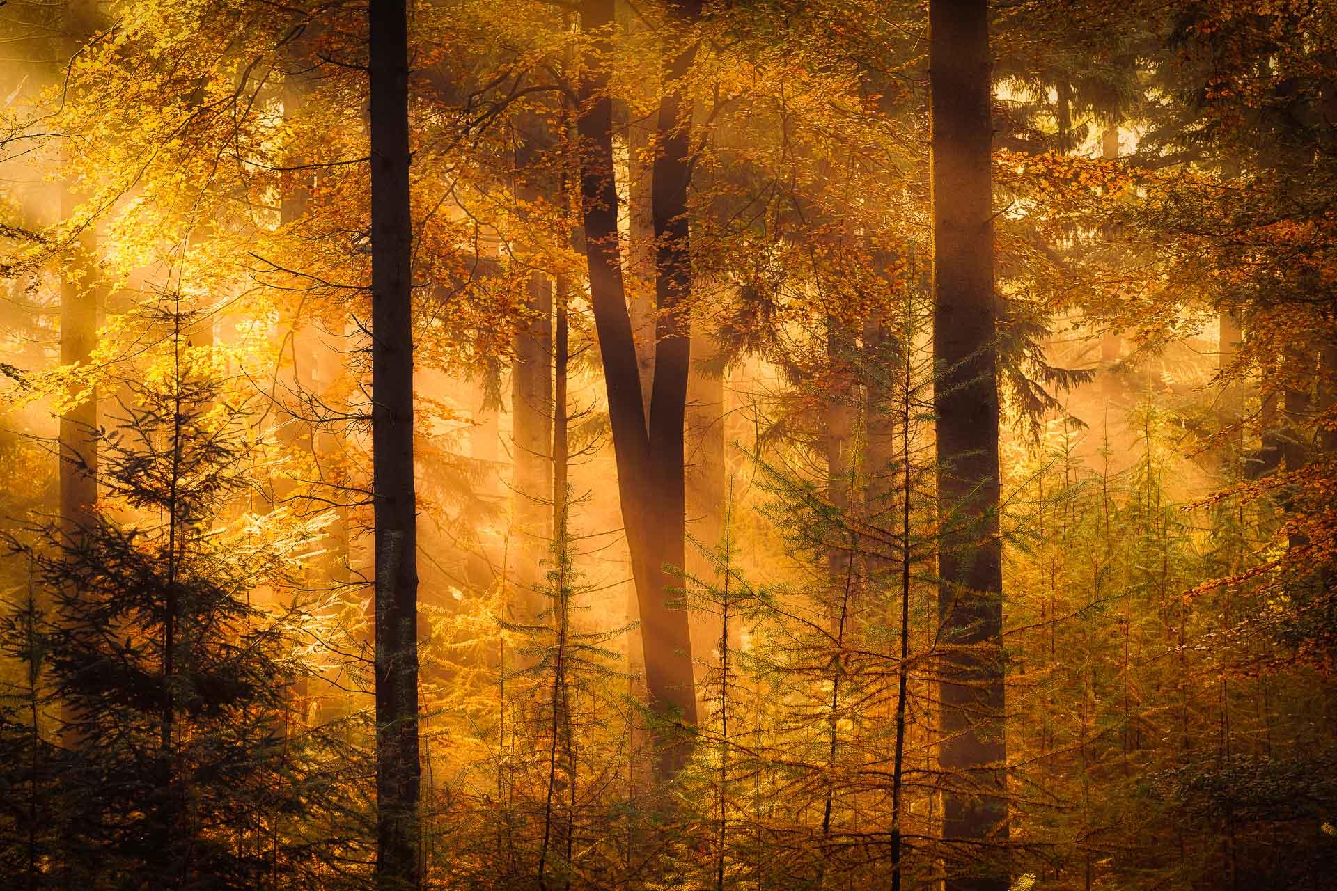 Drenthe in de Herfst - Herfstfoto van de bossen bij Gasteren in Drenthe met prachtig licht