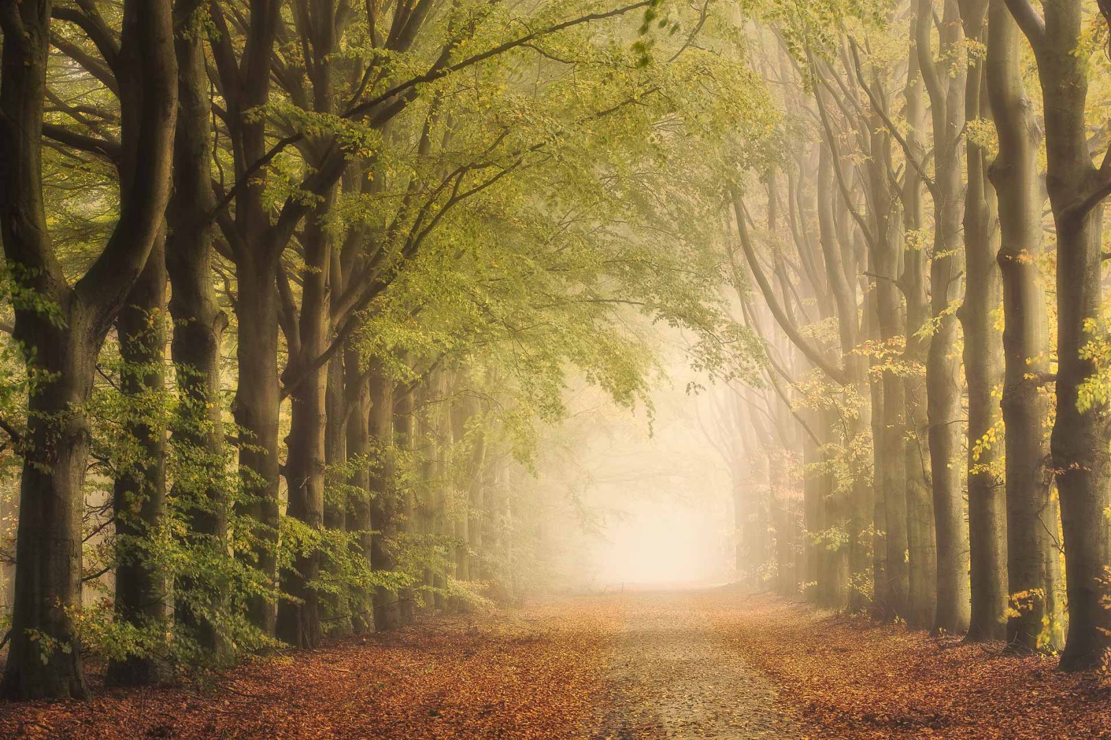 Herfst in Drenthe met een mooie beukenlaan in de mist