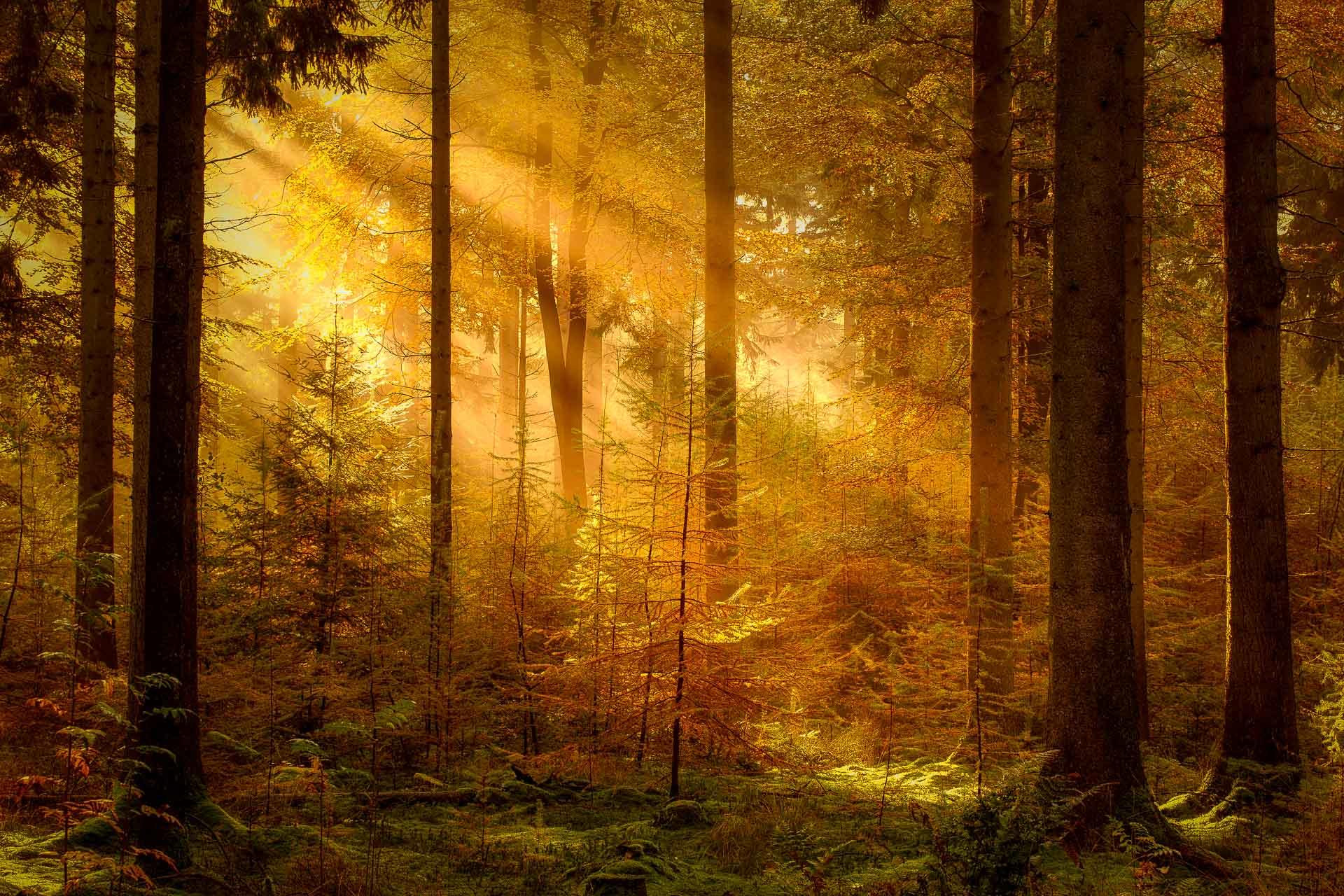 10 tips voor betere herfstfoto's - natuurfotografie - landschapsfotografie