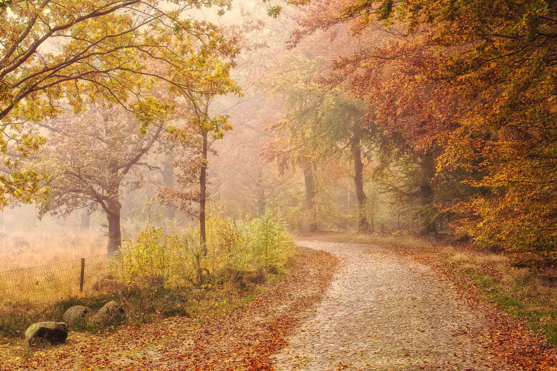 Herfst in Drenthe met mooie herfstkleuren aan de bomen