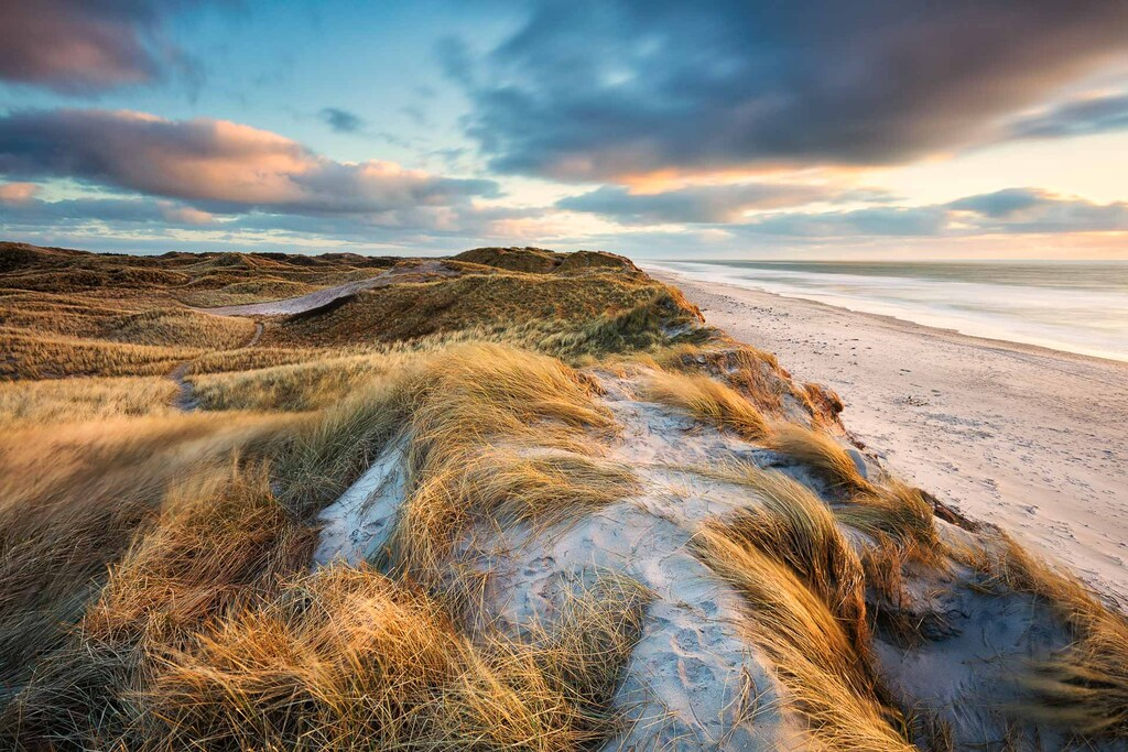 Windswept North sea coastline of Denmark - Sondervig Strand