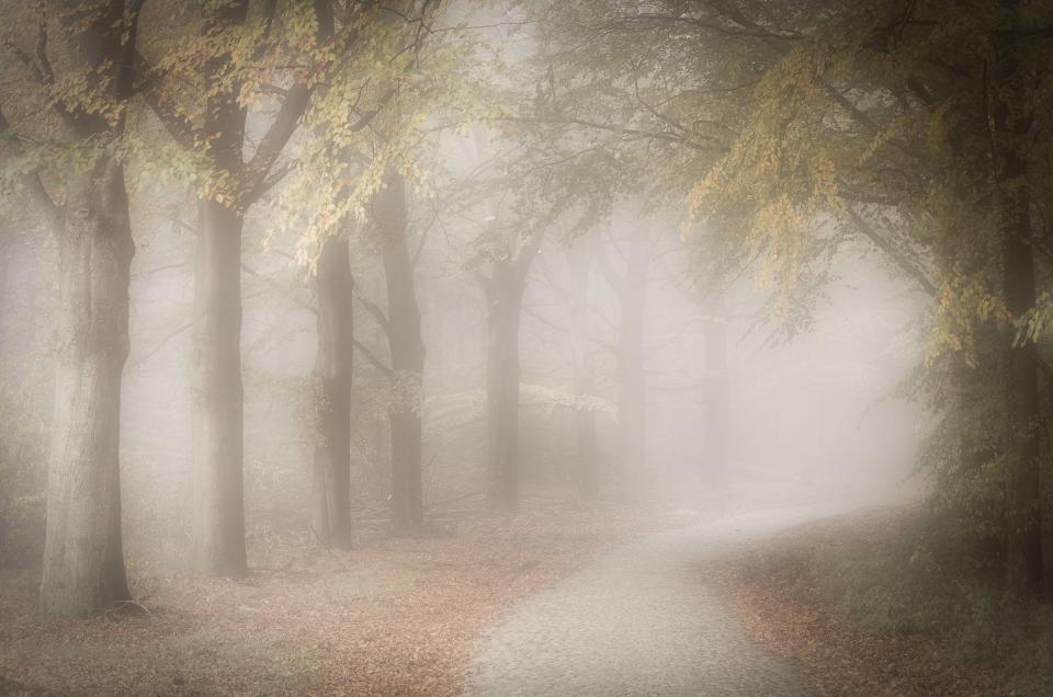 Autumn fog on a beautiful november morning near Gasselte, The Nteherlands