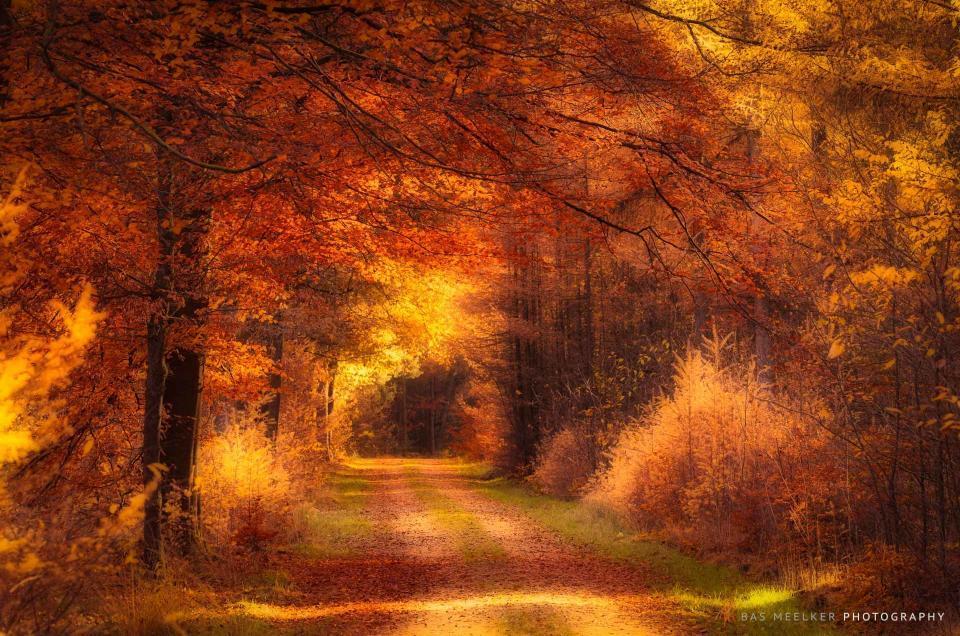 Gouden herfstlicht schijnt door de bomen in de bossen rond Gasselte - Bas Meelker landschapsfotografie