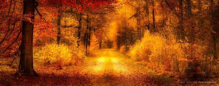 Landschapsfoto-Drenthe-Herfst in de bossen bij Gasselte