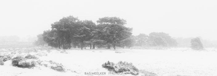 Een panorama van een koude en mistige winter ochtend op het Balloërveld in Drenthe. Sneeuw bedekt de bomen en de mist geeft een mystieke sfeer aan het landschap