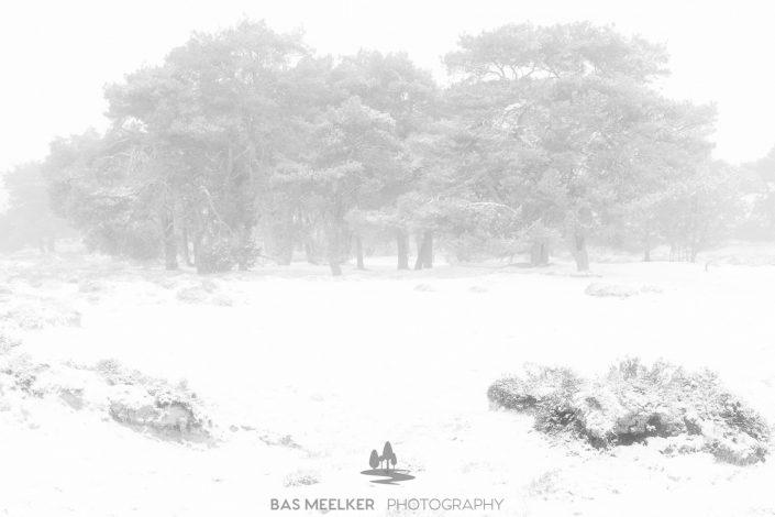 Een koude en mistige winter ochtend op het Balloërveld in Drenthe. Sneeuw bedekt de bomen en de mist geeft een mystieke sfeer aan het landschap
