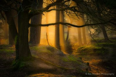 Forest dreams - Gasterse duinen, The Netherlands