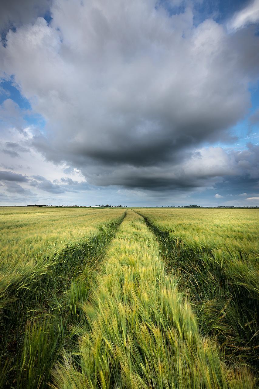Graanvelden Groningen - Donkere regen wolken drijven over de graanvelden in het Hoge Land van Groningen tijdens een warme zomeravond.