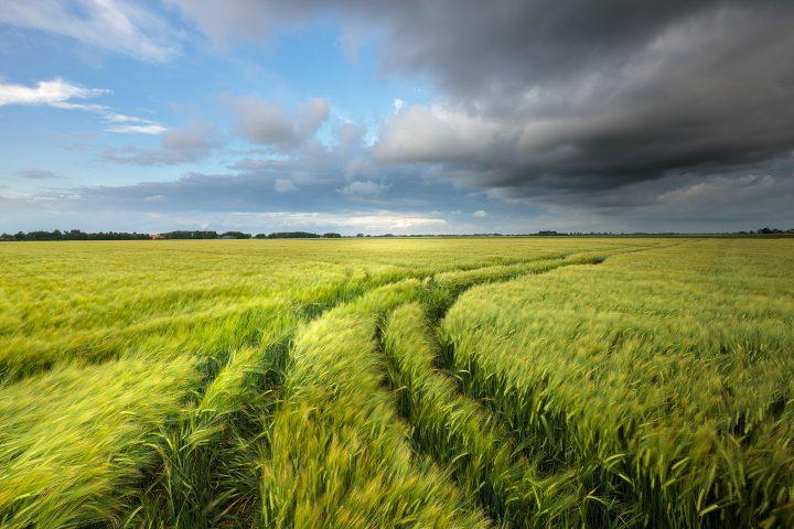 Graanvelden Groningen - Donkere regen wolken drijven over de graanvelden in het Hogeland van Groningen tijdens een warme zomeravond.