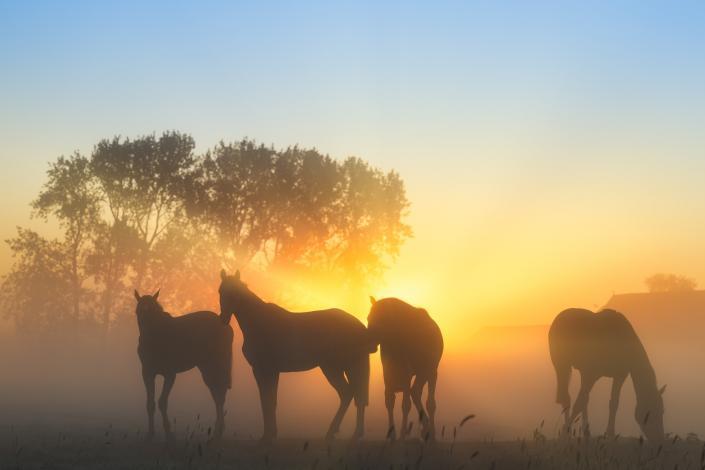 Paarden in de mist op een prachtige ochtend in mei