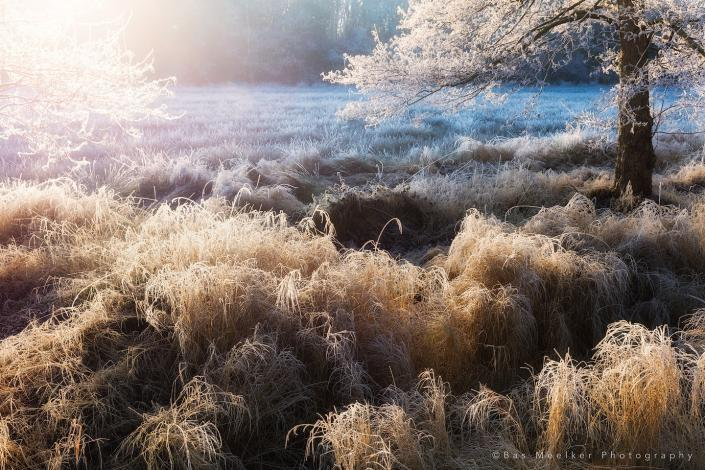 Winterlandschap met prachtig licht en rijp bij Lieveren, Drenthe