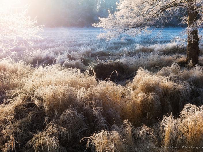 winter photo gallery