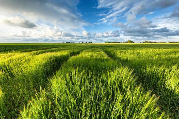 Avondlicht valt over de velden in het noorden van Friesland
