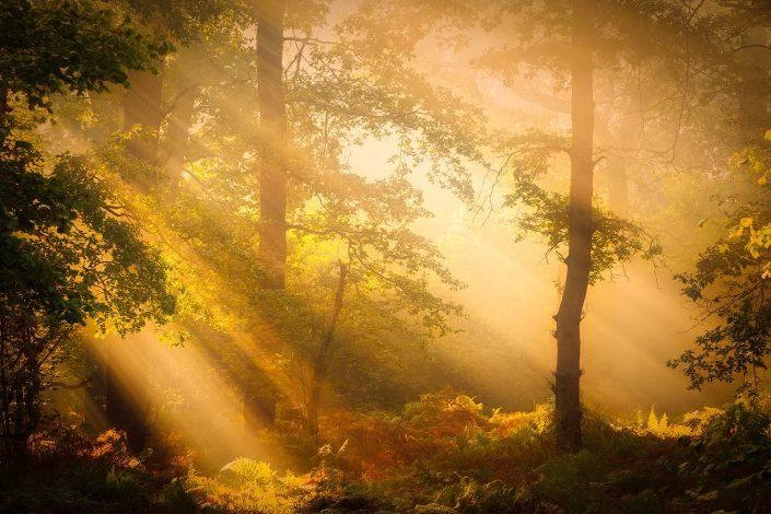 Zonneharpen werpen hun zonlicht door de bomen van het Norgerholt - Norg, Drenthe, Nederland
