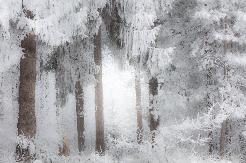 Foto van het Dwingelderveld in de winter met bomen vol rijp