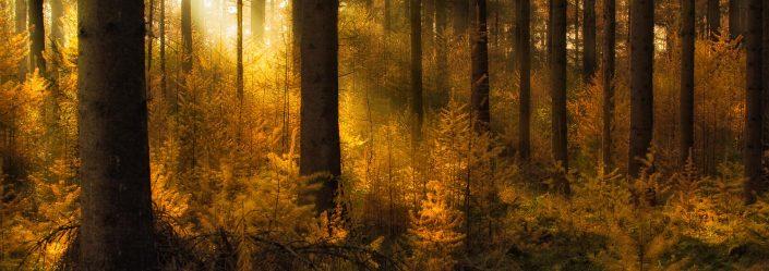 Zonnestralen op een mistige herfst ochtend