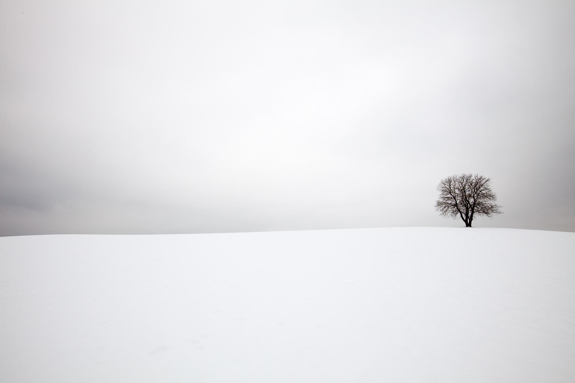 Een eenzame boom in een glooiend winters landschap