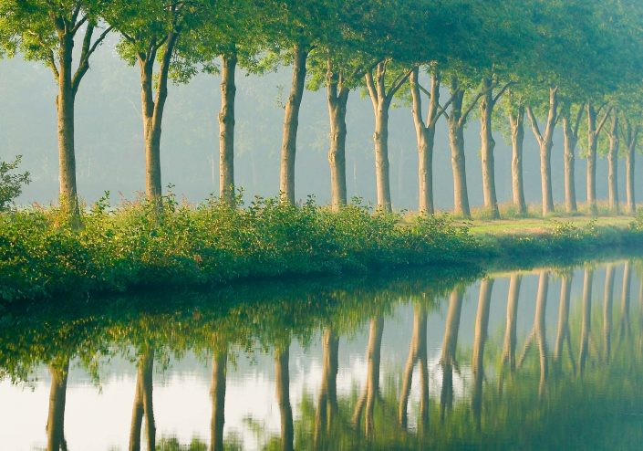 A tranquil and calm morning with trees reflecting in the water
