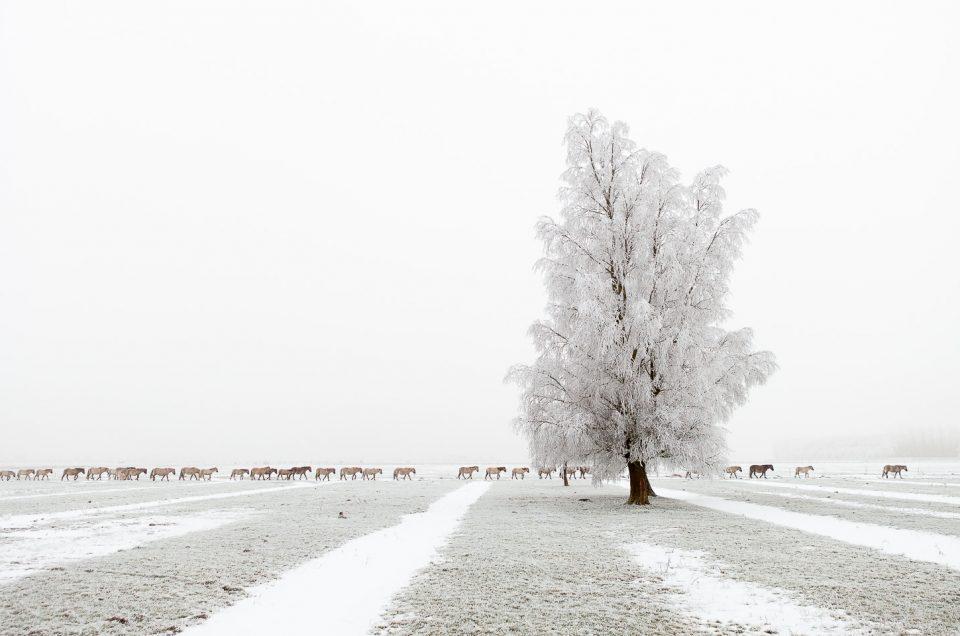 The long March - Lauwersmeer National Park - Landschapsfotografie