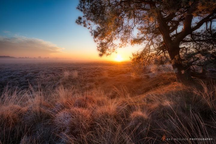 Een koude winterse zonsopkomst op het Balloerveld in Drenthe - Bas Meelker Landschapsfotografie
