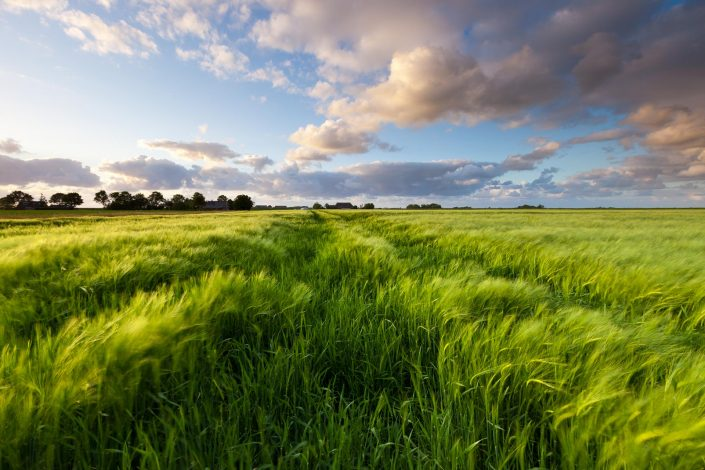 Fields of light - Rural Groningen, The Netherlands