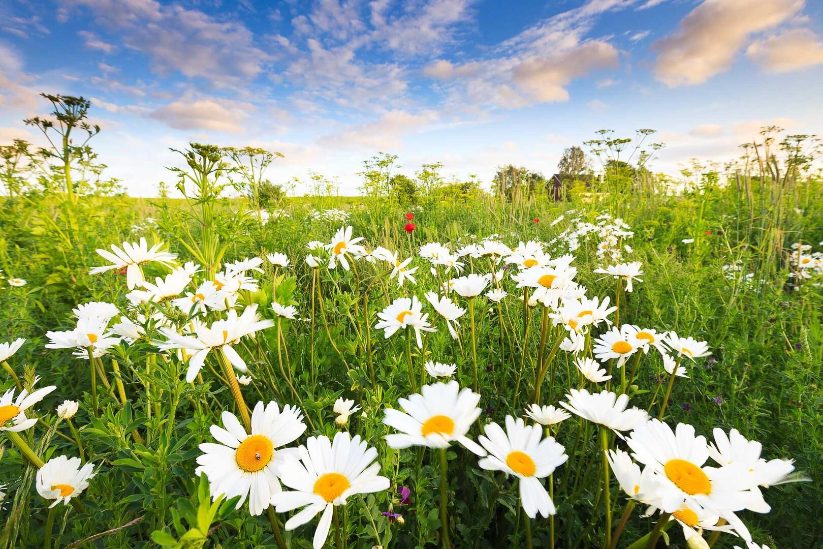 Foto van een bloemenweide in het Groninger land - Bas Meelker Landschapsfotografie