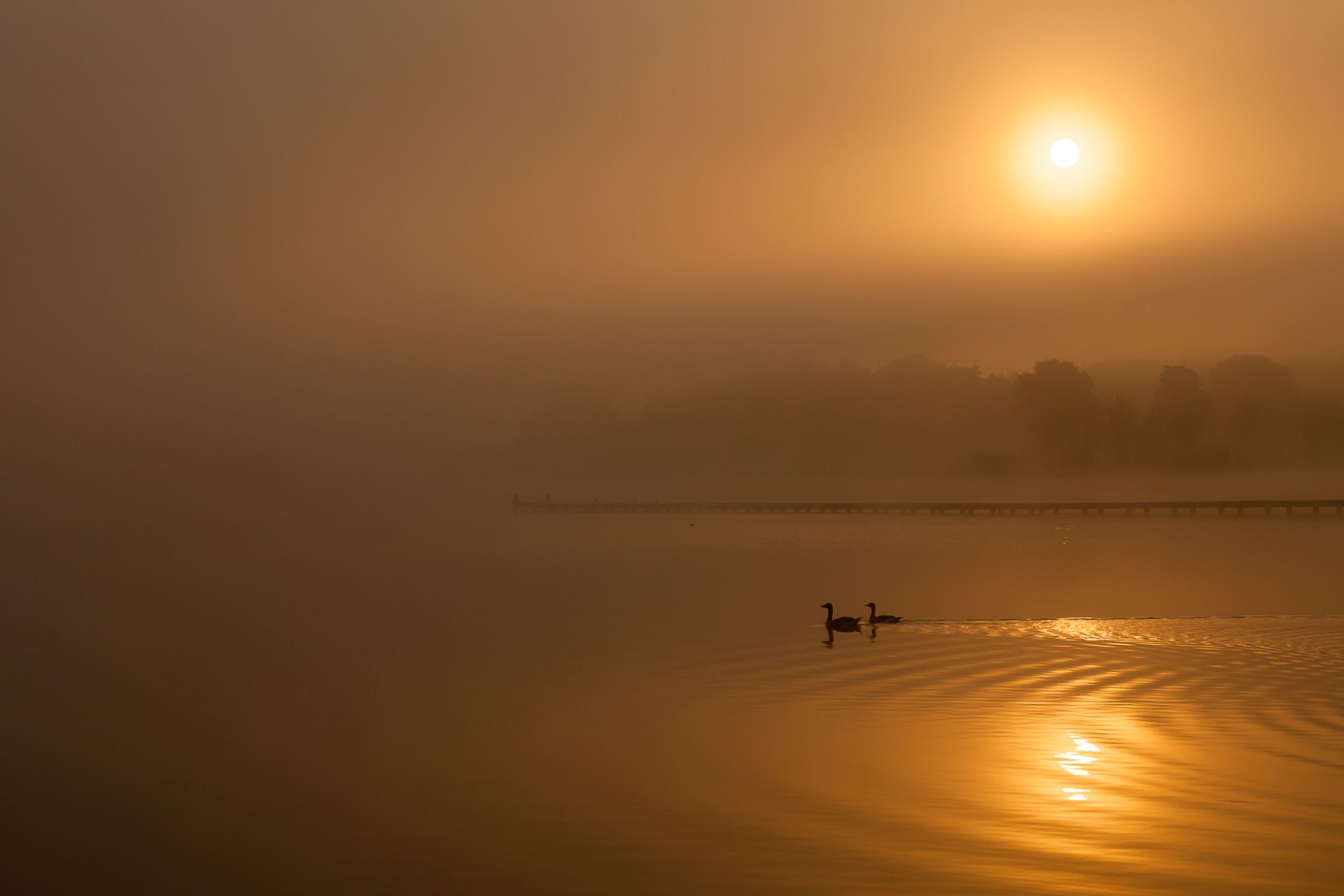 A mystical mood on a calm and tranquil morning at lake Zuidlaardermeer.