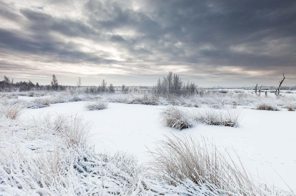 A beautiful winter day at the Fochteloërveen National Park, The Netherlands