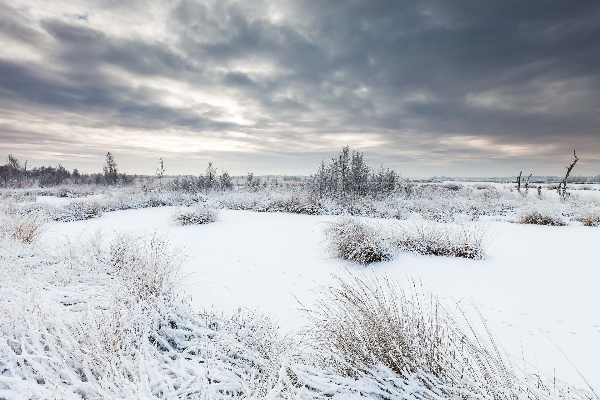 A beautiful winter day at the Fochteloërveen National Park, The Netherlands